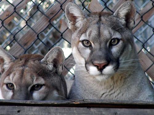 Flashlight Safaris at Big Bear Alpine Zoo